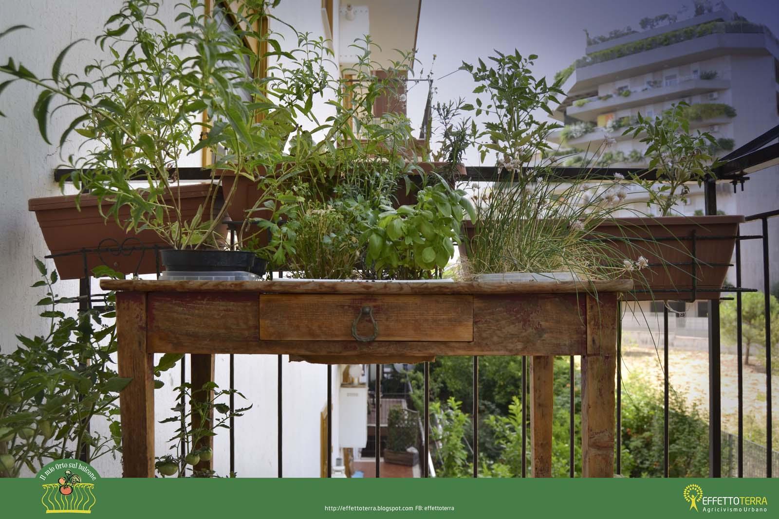 Un orto sul balcone bastano pochi metri gente che coopera - Cucina sul balcone ...